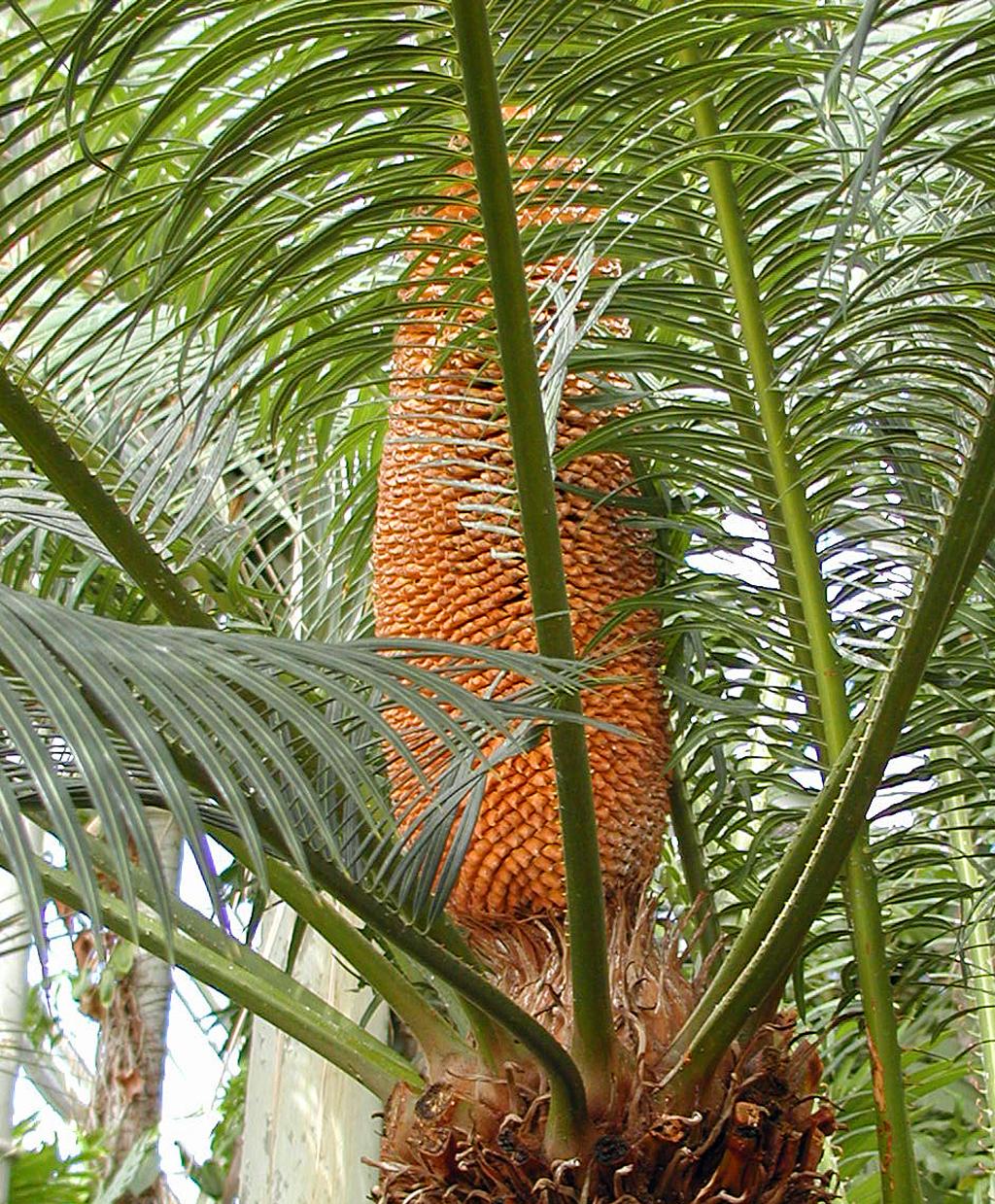 kopenhamns_botaniska_tgd_palm_1024x1239