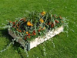 i trädgården - tegetes i pallkrage itradgarden.se