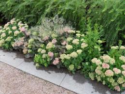 i Trädgården - kärleksört i rabatt, perenn, höstblommande
