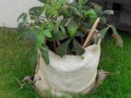 i trädgården - planterat kastanj tygsäck itradgarden.se