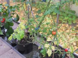 i trädgården - växthus, vattenkar, bevattning itradgarden.se