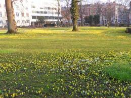i trädgården- vintergäck, snödroppar, Malmö gamla kyrkogård itradgarden.se