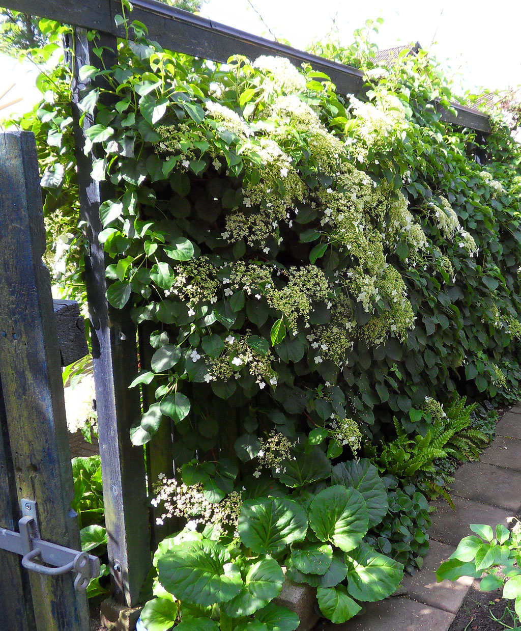 Trädgård plank trädgård : Cornelias & Hans trädgÃ¥rd | i TRÄDGÅRDEN