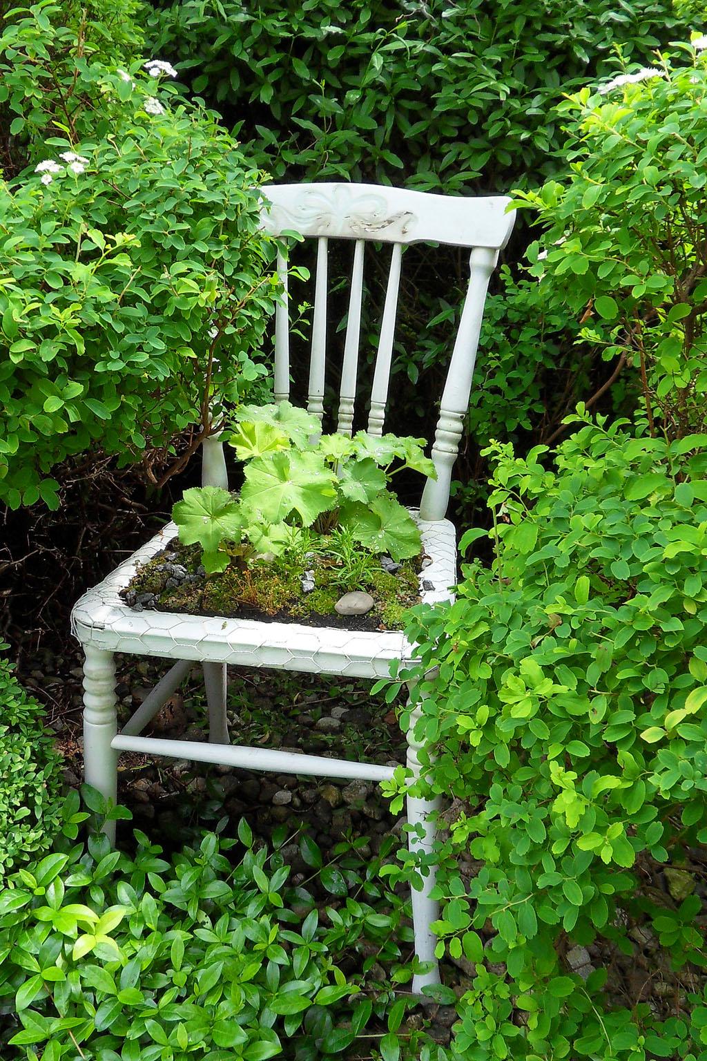 i Trädgården - odling på stol, mossa, daggkåpa