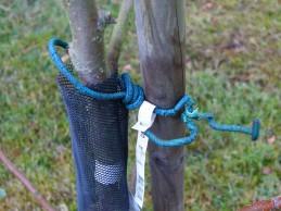 i Trädgården - kontrollera uppbindingen på fruktträden itradgarden.se