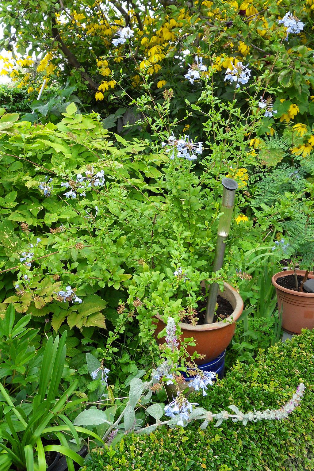 i Trädgården - blyblomma i kruka, rabatt, solcellslampa