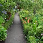 i Trädgården - trädgårdsgång med buxbom, rabatter