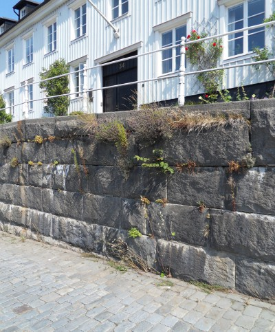 i Trädgården - växter på mur, torra läge