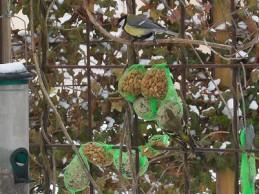 i trädgården - fotsätt mata fåglarna om våren och vintern. Fågelmat, fågelbord itradgarden.se