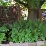 i trädgården - skugga under träd, bänk, skuggrabatt