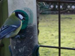 i trädgården - mata fåglar, vinter itradgarden.se