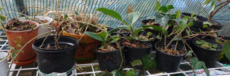 i trädgården - växter, växthus, vinter www.itradgarden.se