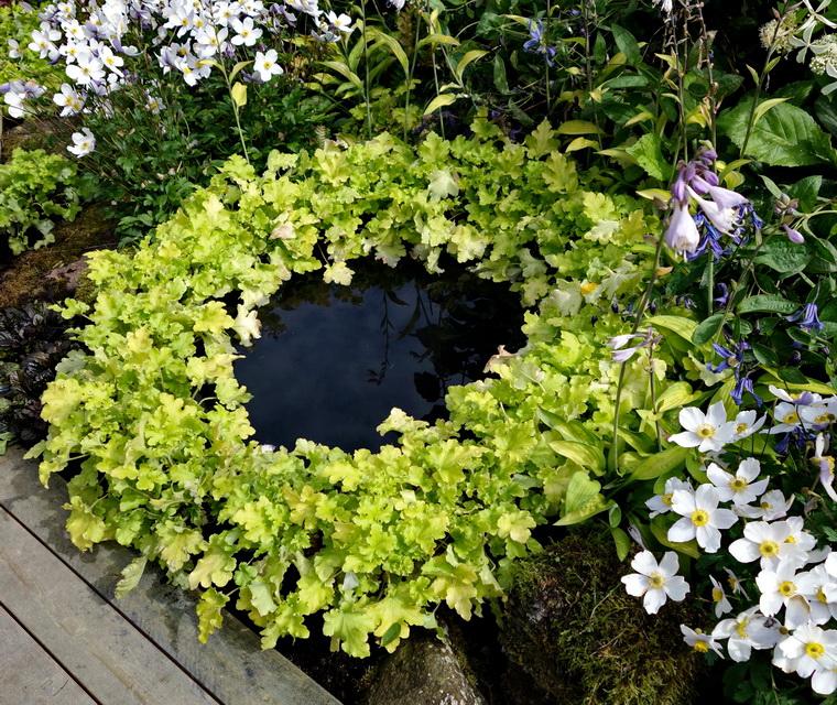liten damm i trädgården