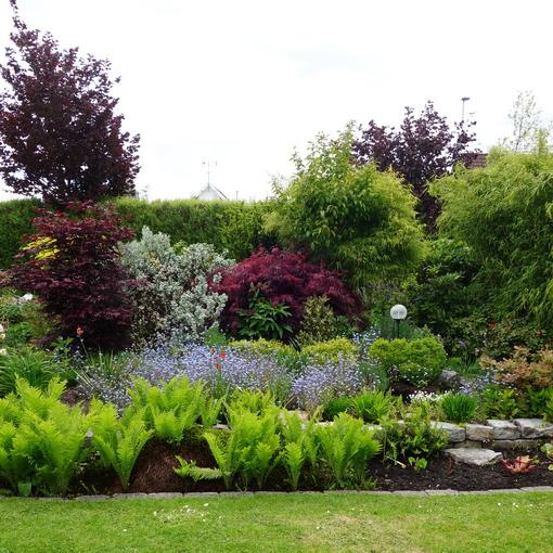 trädgårdens buskar och träd