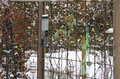 Mata fåglar med talgbollar och fågelfrö
