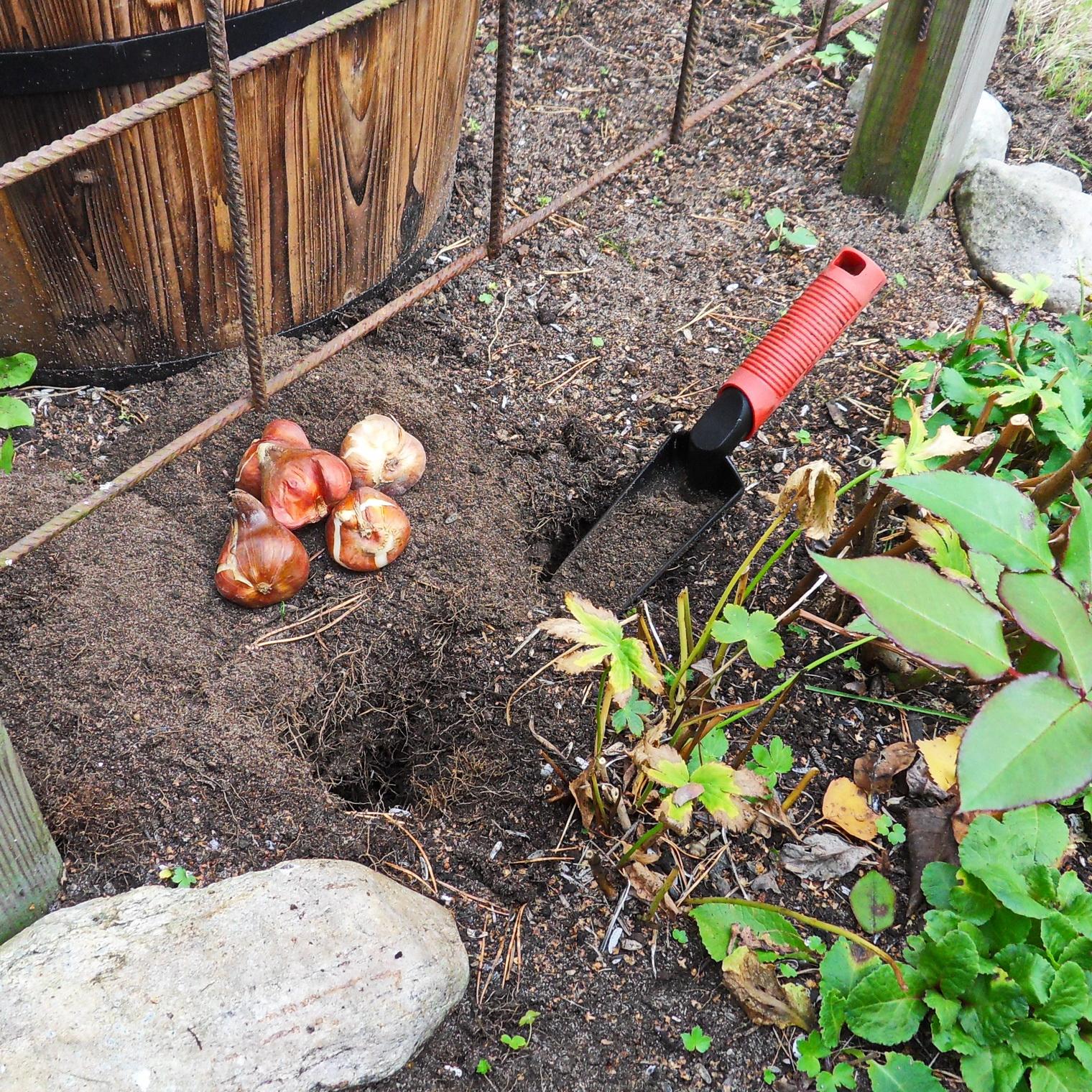 i trädgården - plantera höstlökar, tulpaner www.itradgarden.se