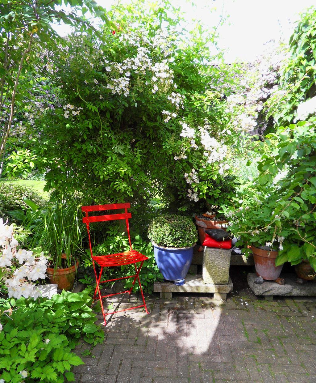 i Trädgården - röd stol i skuggan under japansk klätterros, buxbom, kruka