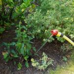 i Trädgården - rotvattnare, effektiv bevattning av växter, vattna, perenner, buskar, träd