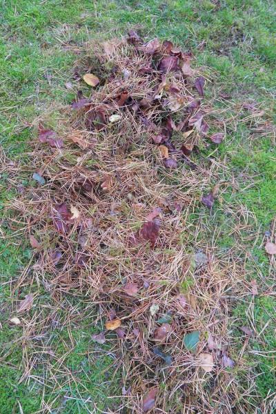 i Trädgården -barr försurar gräsmattan, ph-värde