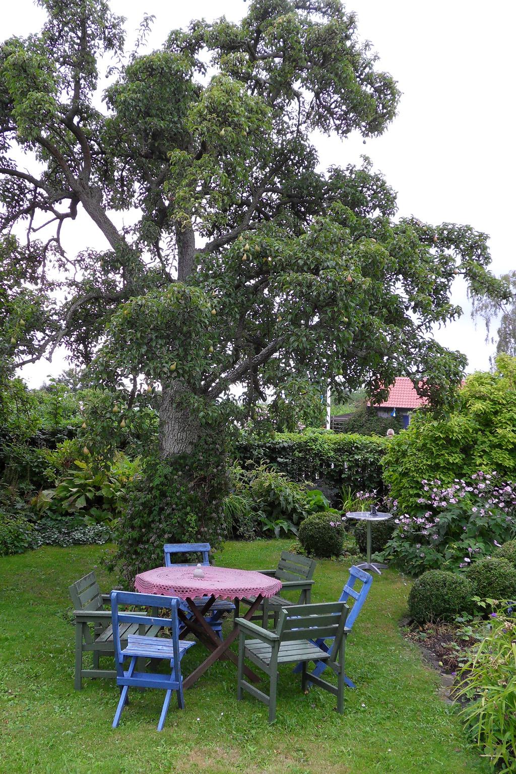i Trädgården -sittplats under gammalt päronträd, möbler