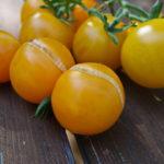 Tomaterna spricker